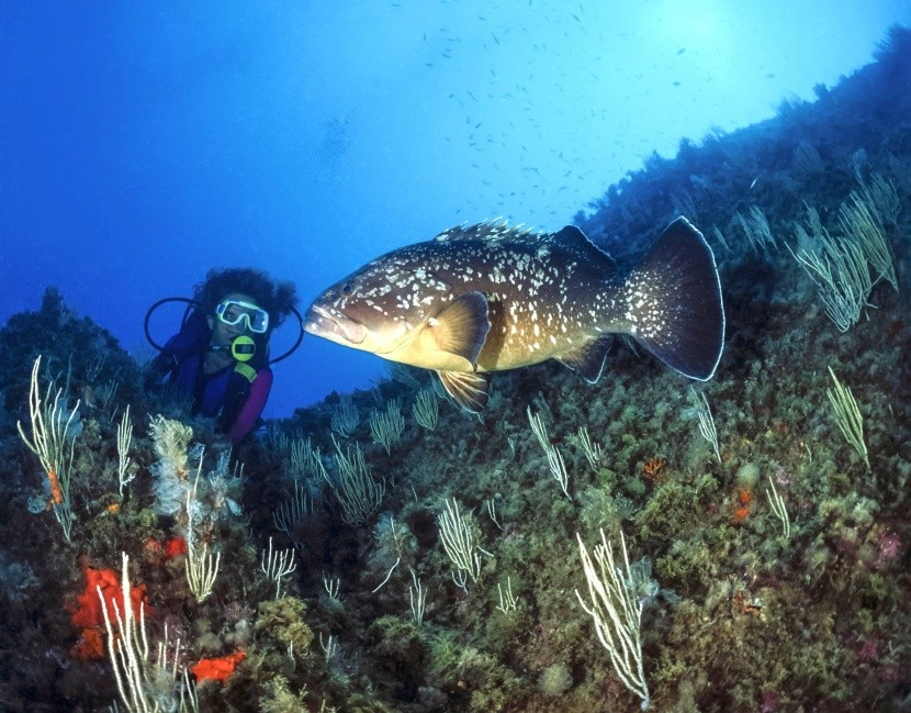 Potápanie v Tabarke