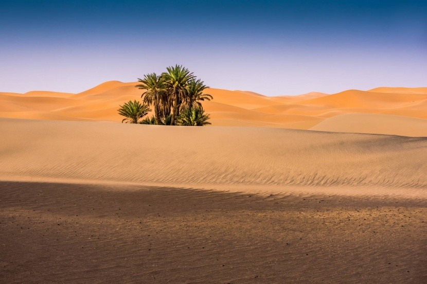 Oáza v púšti