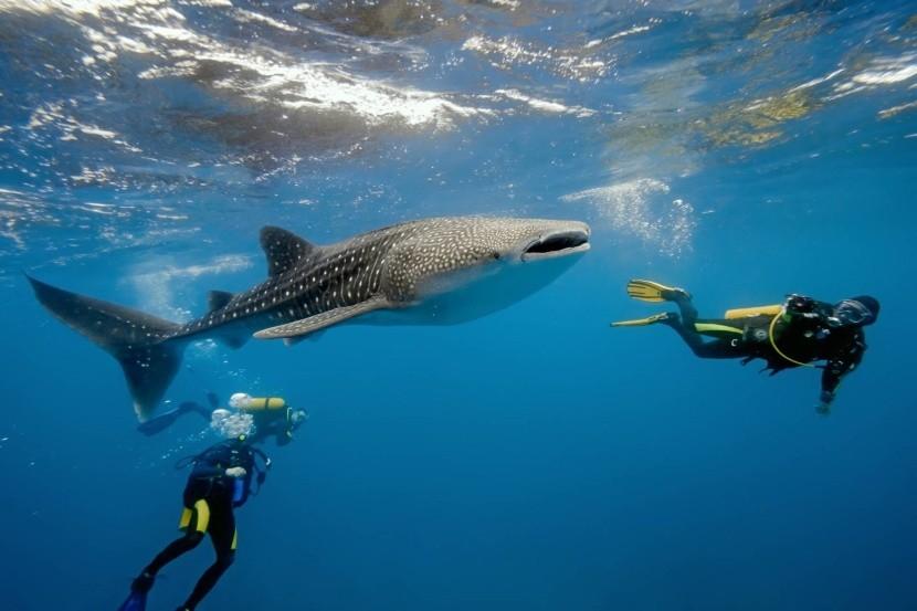 Fantastické potápění na Maledivách