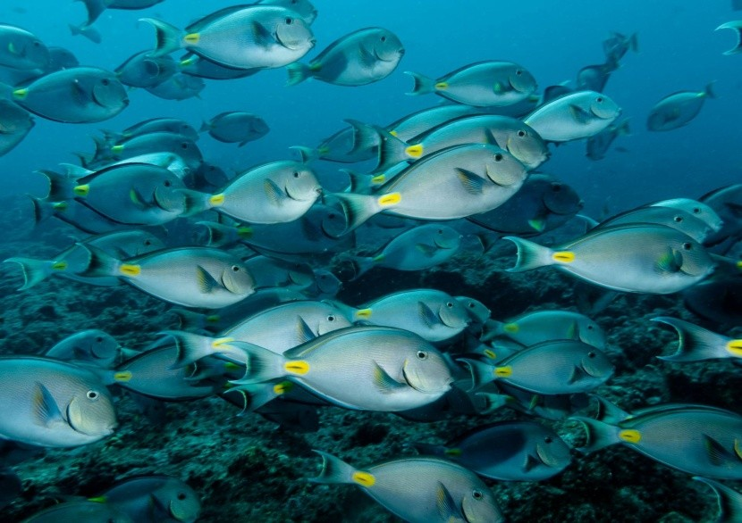 Podmorský život v okolí Kapverd