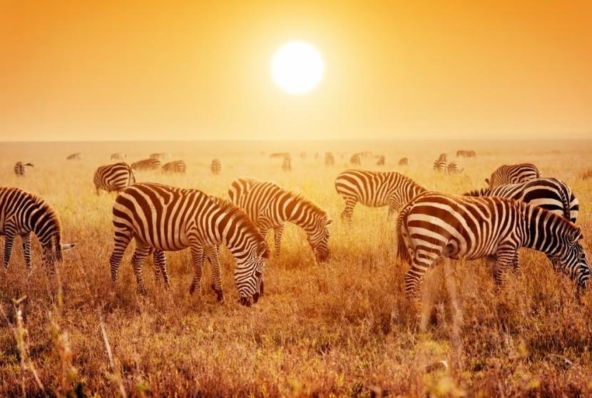 Park Serengeti