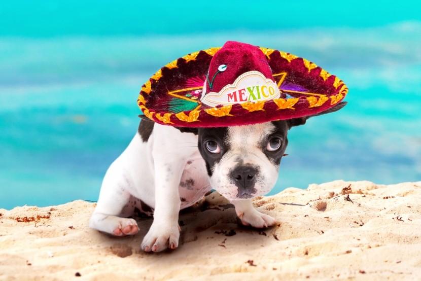 Mexikó, kalapos kiskutya