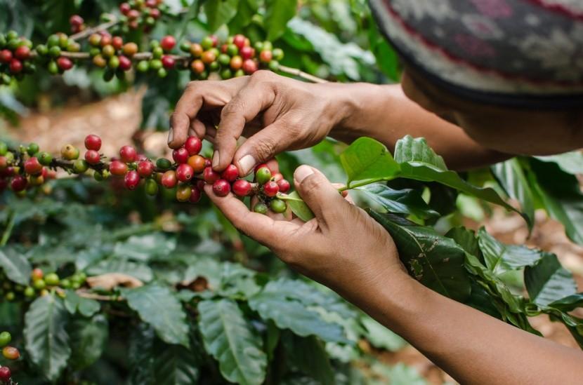 Nyaralás a kávé illatával