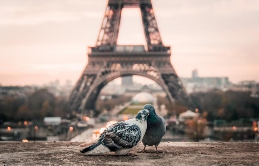 Zamilovanost Eiffelovce sluší