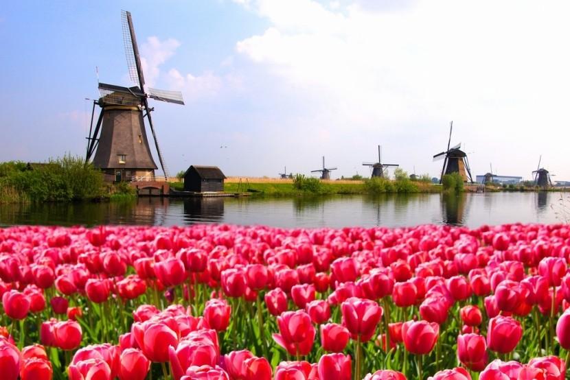 Szélmalmok és tulipánok Hollandiában
