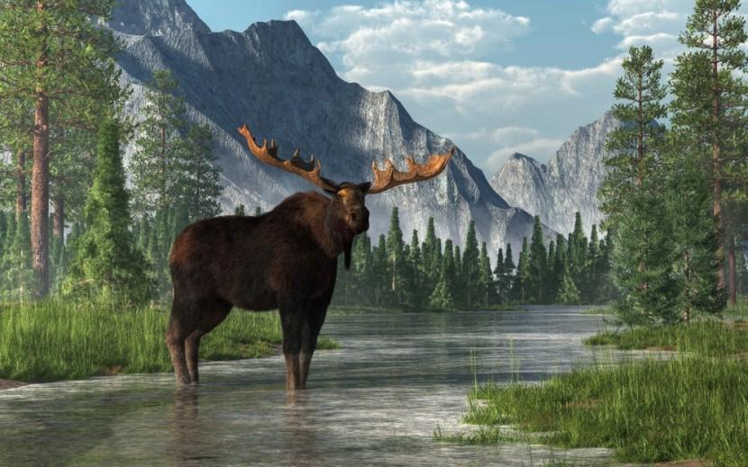 Érintetlen természet és jávorszarvas Kanadába