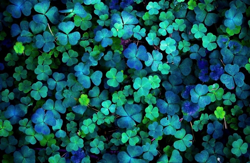 Barvou Irska i Dne svatého Patrika byla modrá
