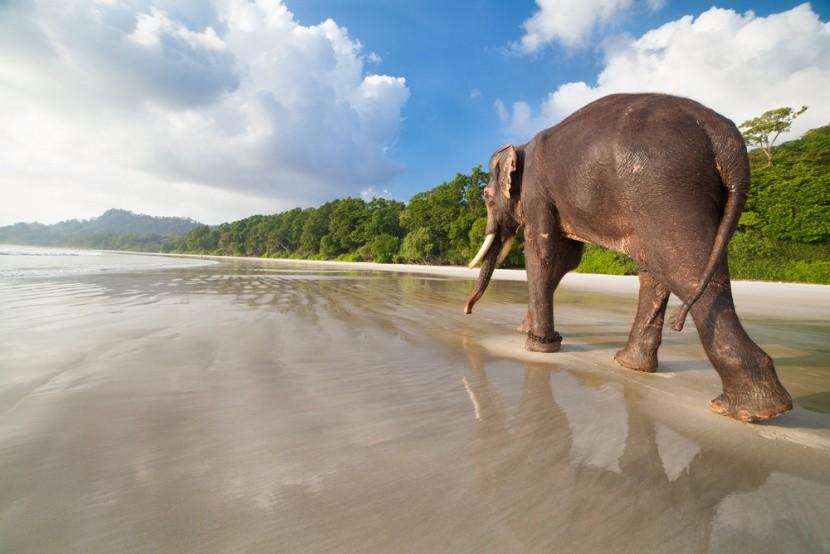 Na andamanskej pláži môžete stretnúť aj  slon