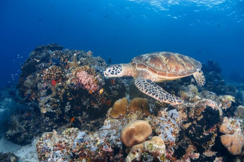 Morský život okolo ostrova Sipadan v Malajzii