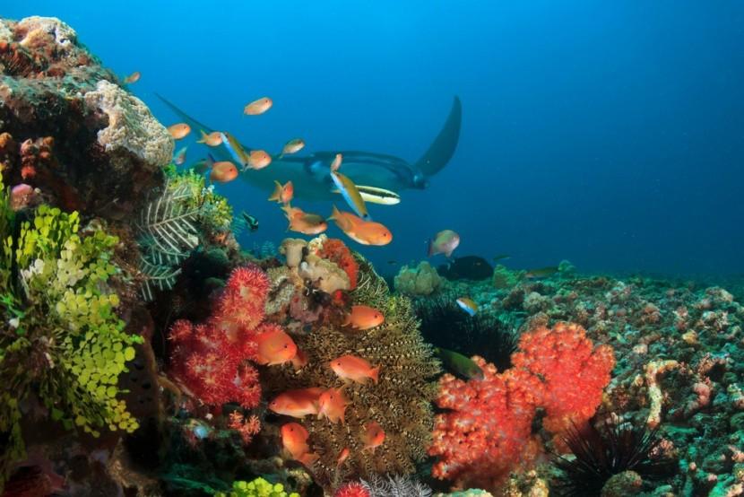 Ningaloo Marine Park, Ausztrália