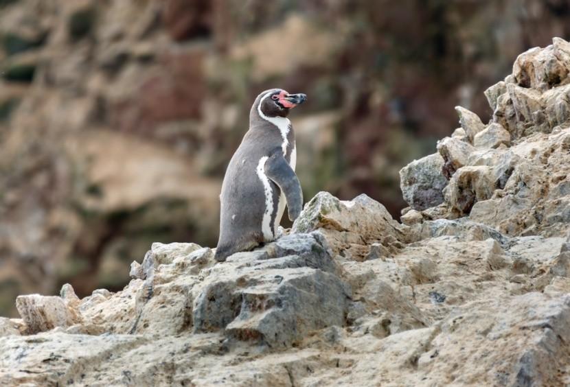 Prírodná rezervácia Paracas