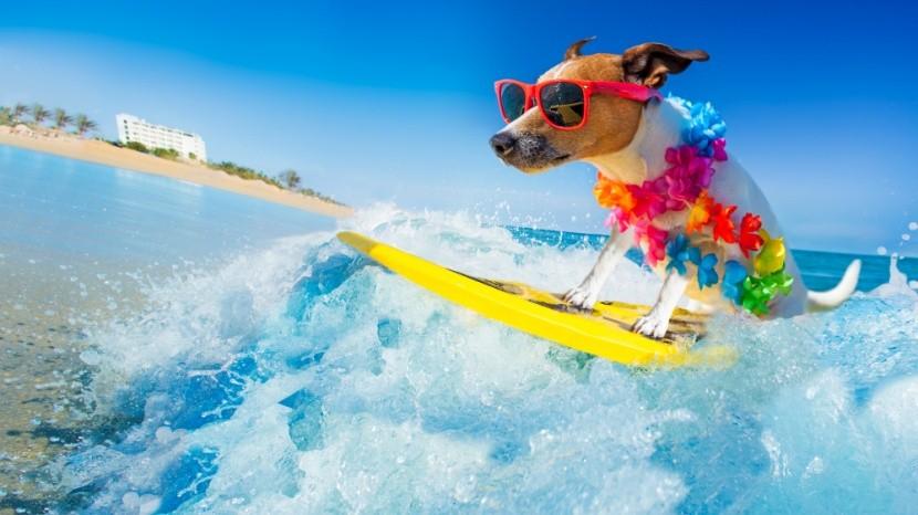 Chystáte sa v júni na dovolenku?