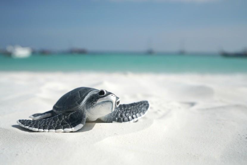 Ochraňujte morské korytnačky!