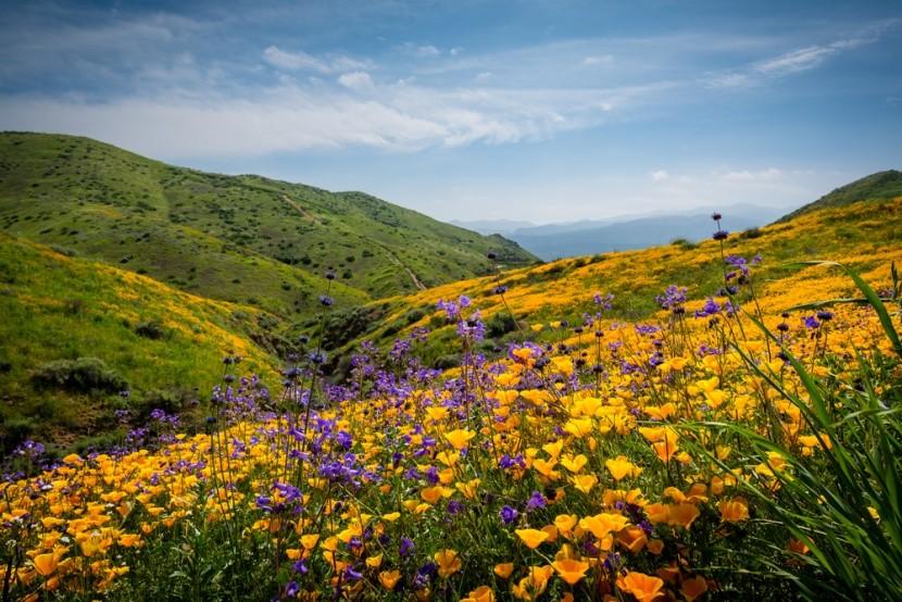 A gyönyörű dombot jelentő Loma Linda