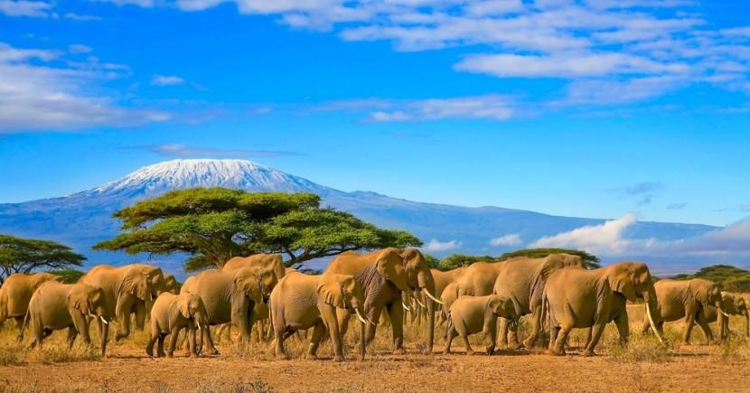 Safari a Kilimandžáro v Keni