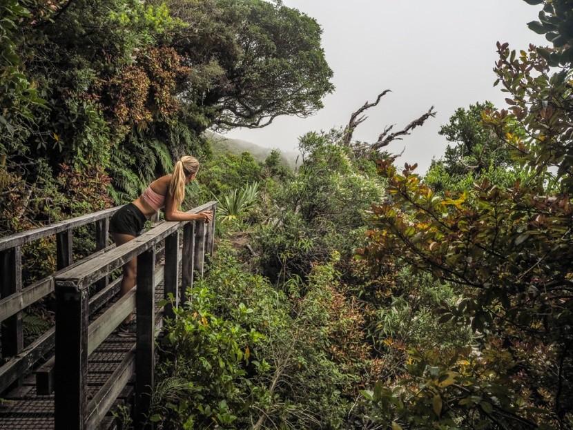 Úpatí hory Taranaki