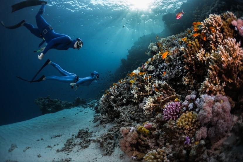 Egyiptom, Vörös-tenger, búvárkodás