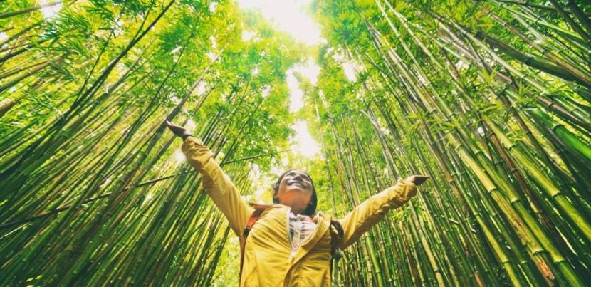 Bambuszerdő bejárása környezetbarát módon