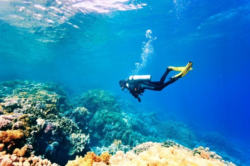 Potápění v Tunisku