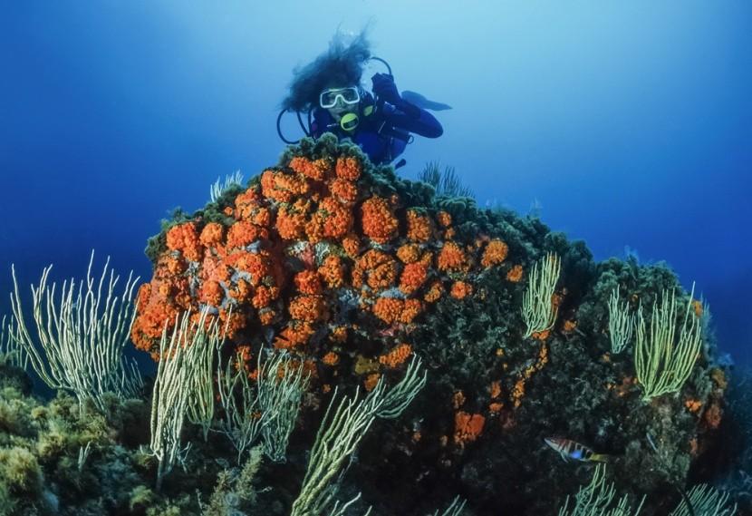 Podmořský svět v Tabarce