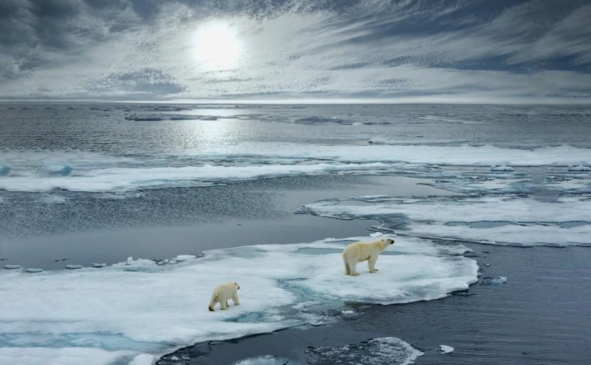 Jegesmedvék a sarkvidéken