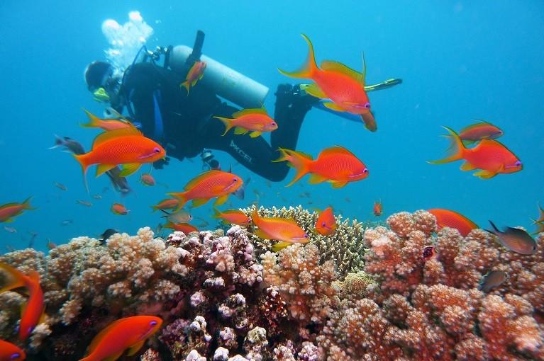 Świat podwodny w Egipcie