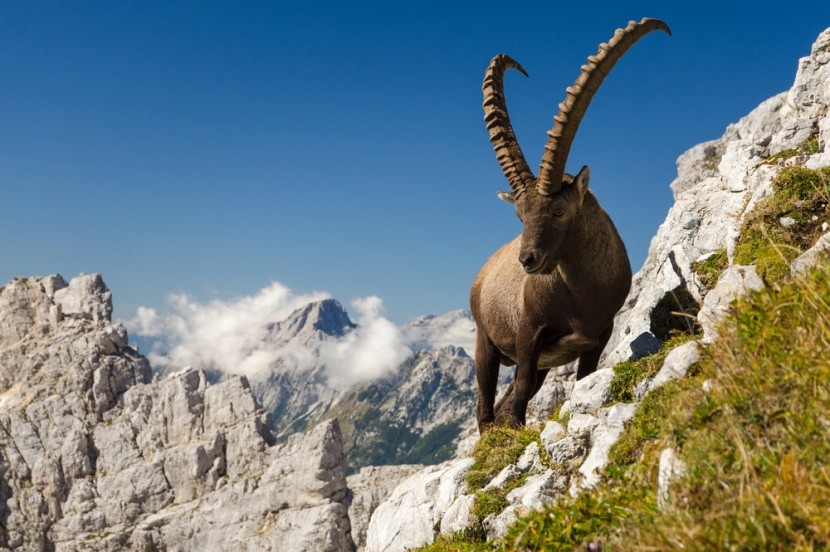 Král hor,  Julské Alpy