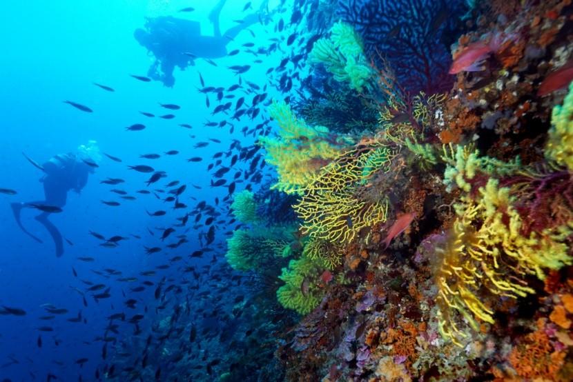 Korálový útes, Lastovo