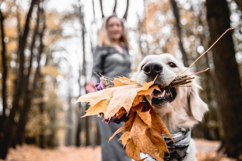 Őszi kirándulás kedvencünkkel