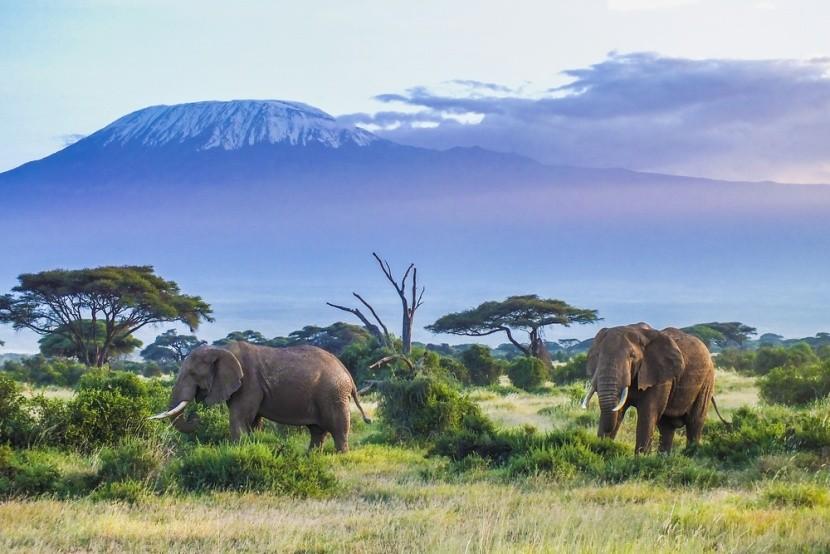 Sloni a Kilimandžáro v Keni