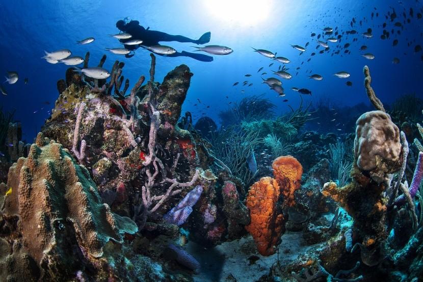 Curaçao je ráj potápění a šnorchlování