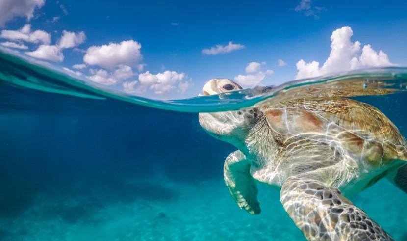 Curaçao a místní želvy