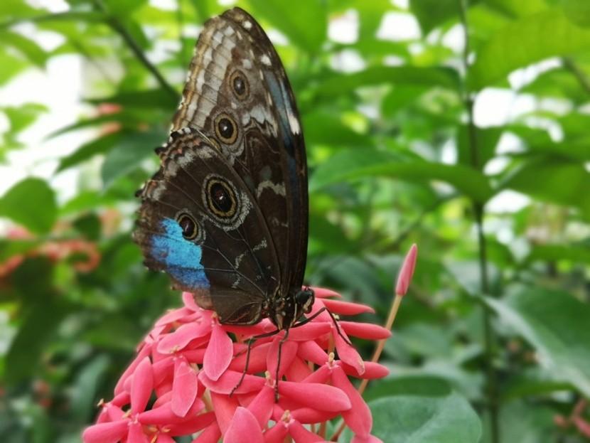 Csak ülj a pillangók között és meditálj!
