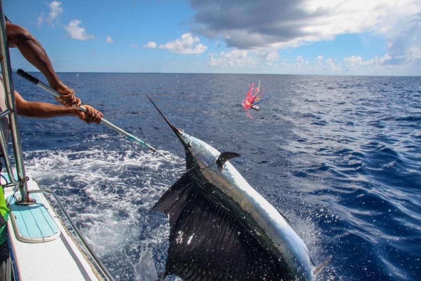 Rybolov na Seychelách