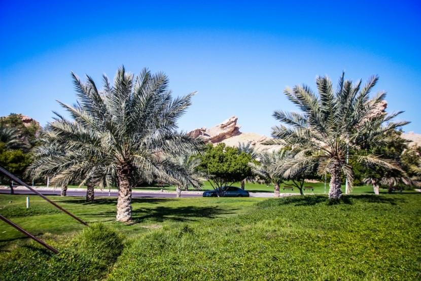 Oáza v poušti