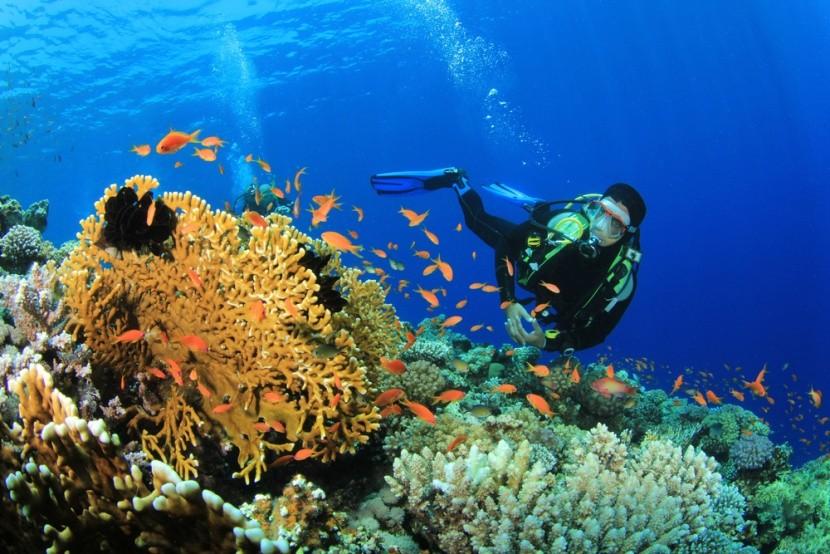 Merülés a korallzátonynál