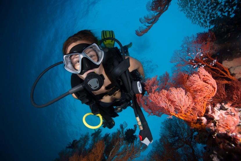 Búvárkodás a korallok között
