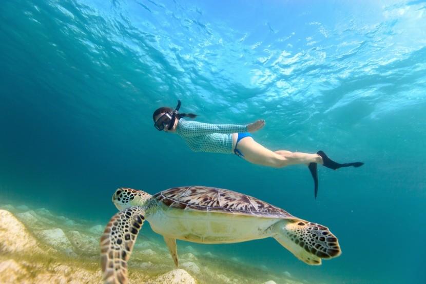 Teknőssel való úszás