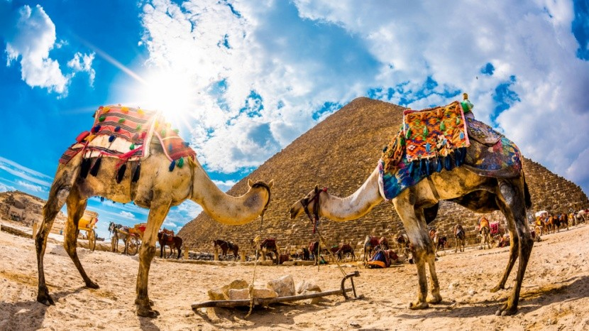 Egyiptomi piramisok látképe tevével