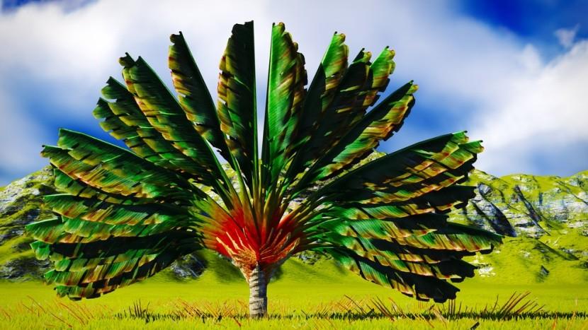 Ravenala, národní symbol Madagaskaru