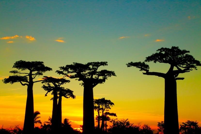 9 důvodů, proč vyrazit na Madagaskar