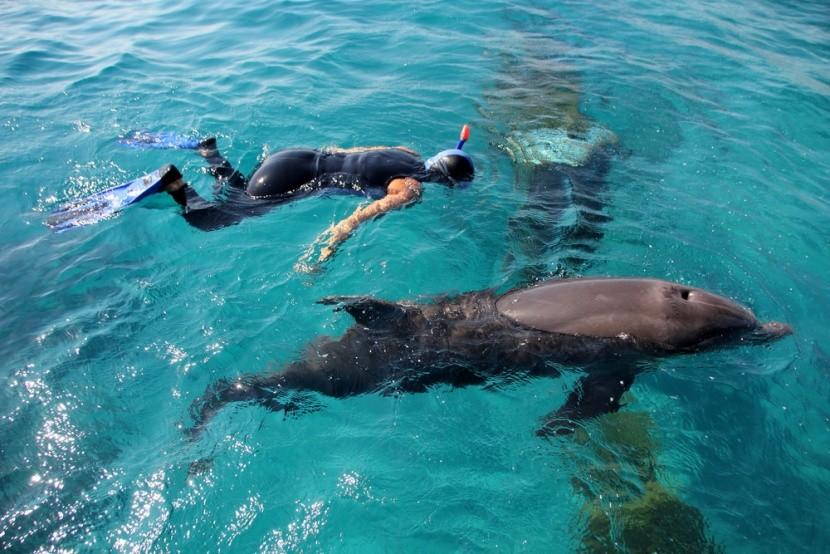 Merülés delfinnel
