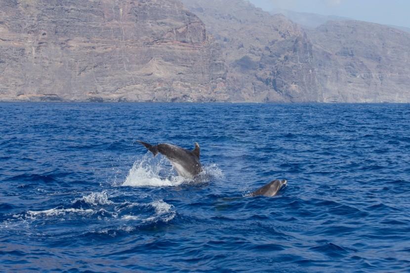 Eilat, delfinek