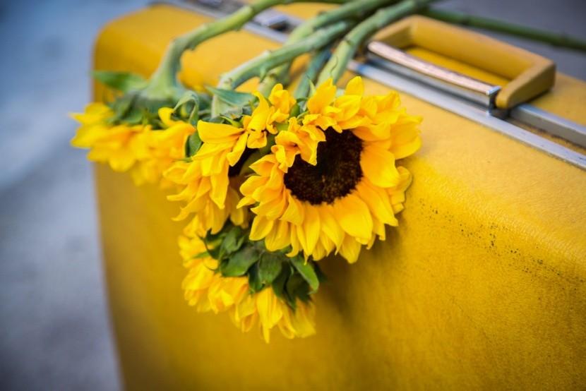 Napraforgó a bőröndön